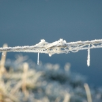 Prikkeldraad met ijs ©CocoOltra